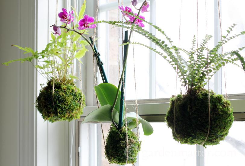 Hanging string garden - easy kokedama -gardenmatter.com