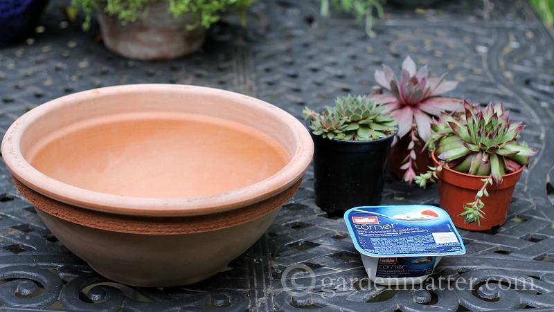 Succulents and terra cotta planter
