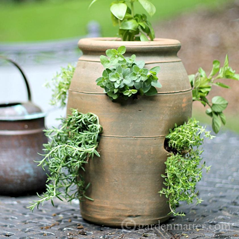 Growing herbs in a terra cotta strawberry planter