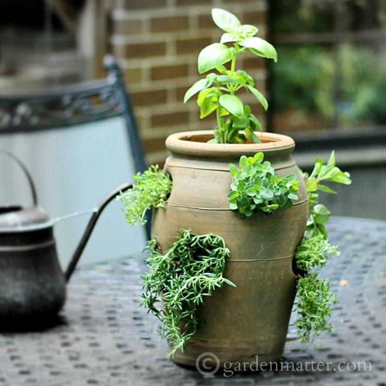 Growing herbs in a strawberry pot ~ gardenmatter.com