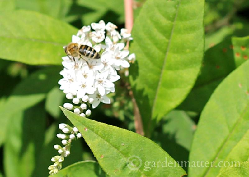 Missing Bee Mystery  – The Buzz on Vanishing Bees