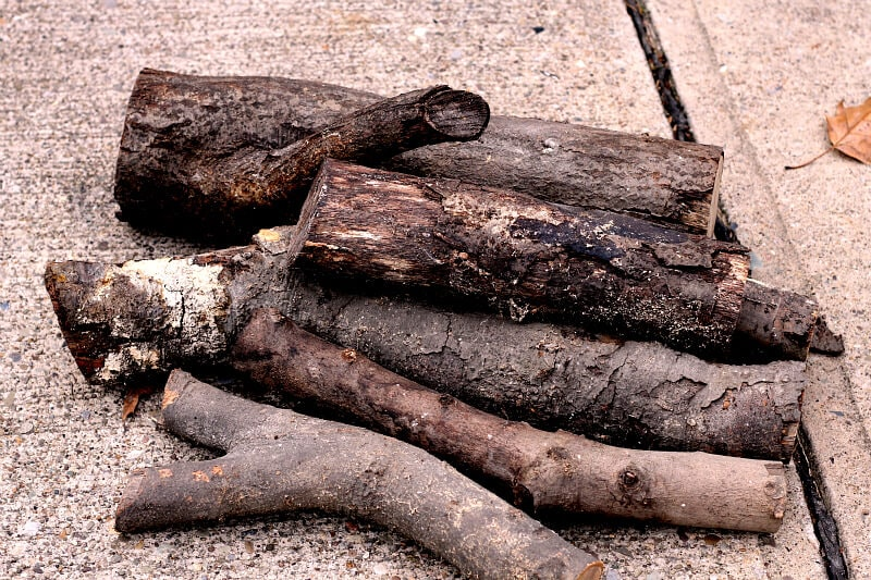 Old firewood logs