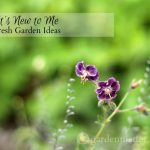 It's New to Me: Fresh Garden Ideas