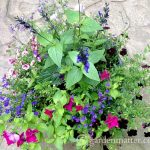 Planting Tips for Container Gardening