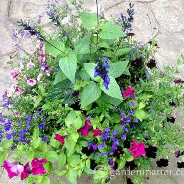 Large container garden ~gardenmatter.com