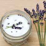 Lavender sugars for cooking or drinks.