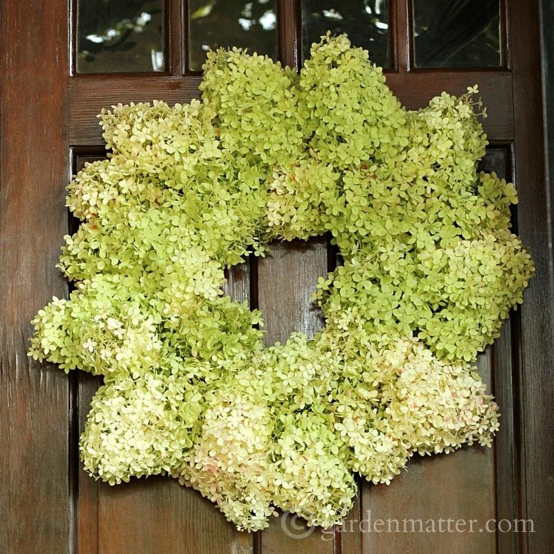 Limelight Hydrangea Wreath on door