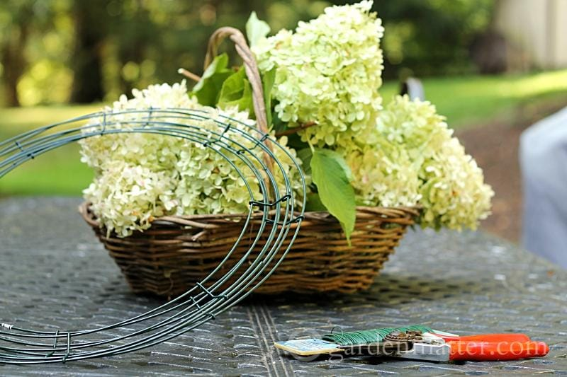 Limelight hydrangea wreath suppies