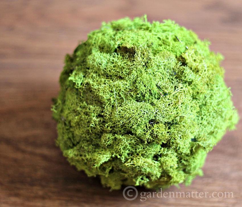Moss ball ~gardenmatter.com
