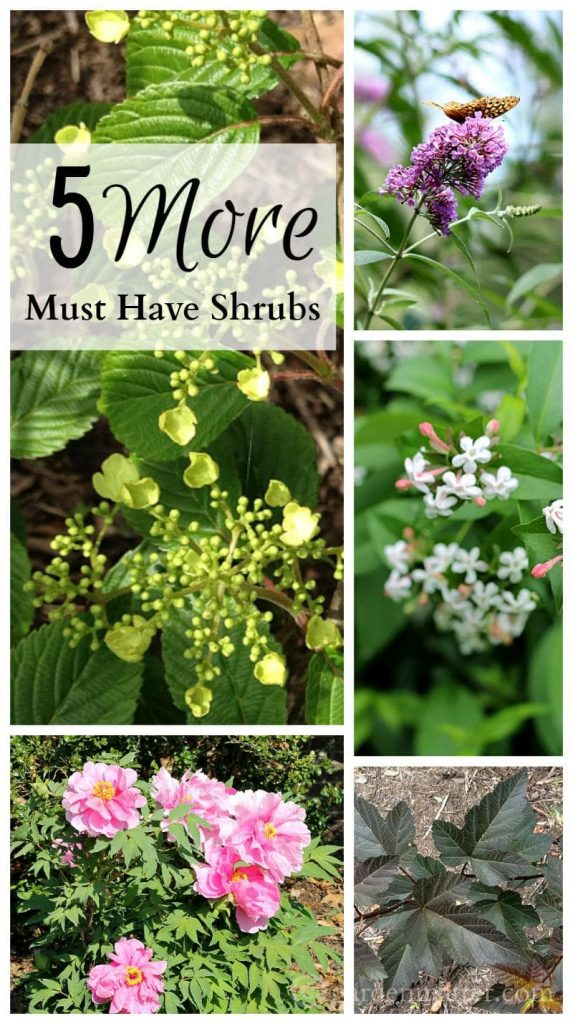 five must have shrubs collage