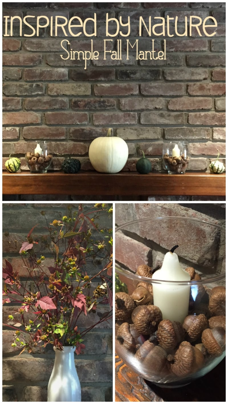 Nature inspired mantel for fall is a great affordable way to bring the beauty of nature into your home.