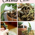 Repotting Orchids and Basic Care – It's Easier Than You Think