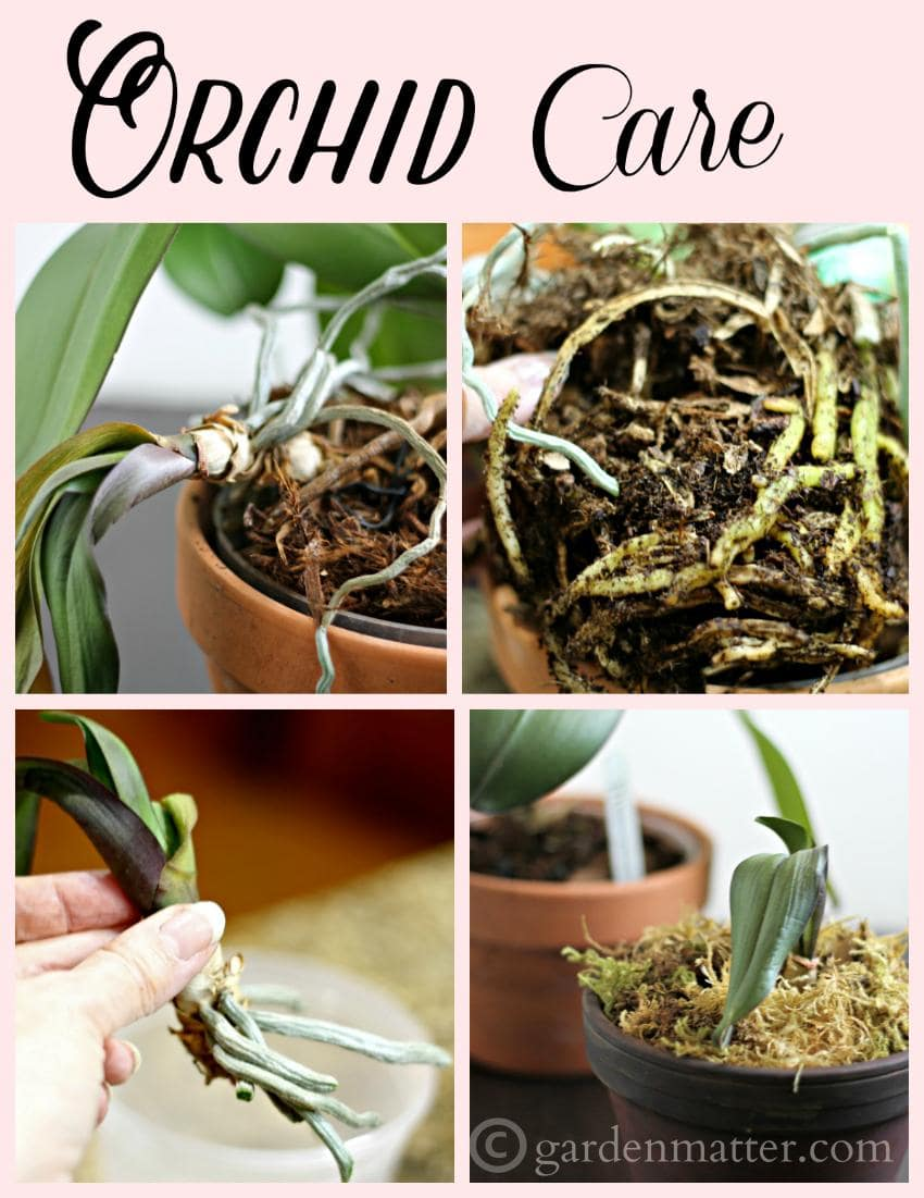Did you know orchids were easy to grow? How do you know when it's to re-pot?