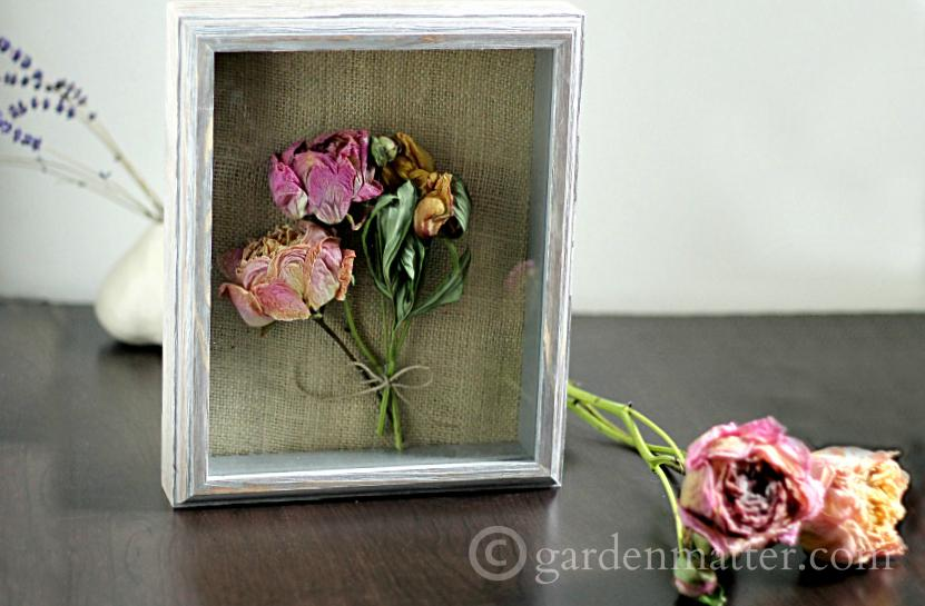 display - Shadow Box Dried Peonies ~gardenmatter.com