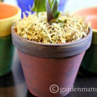 Pigment Pots ~ gardenmatter.com