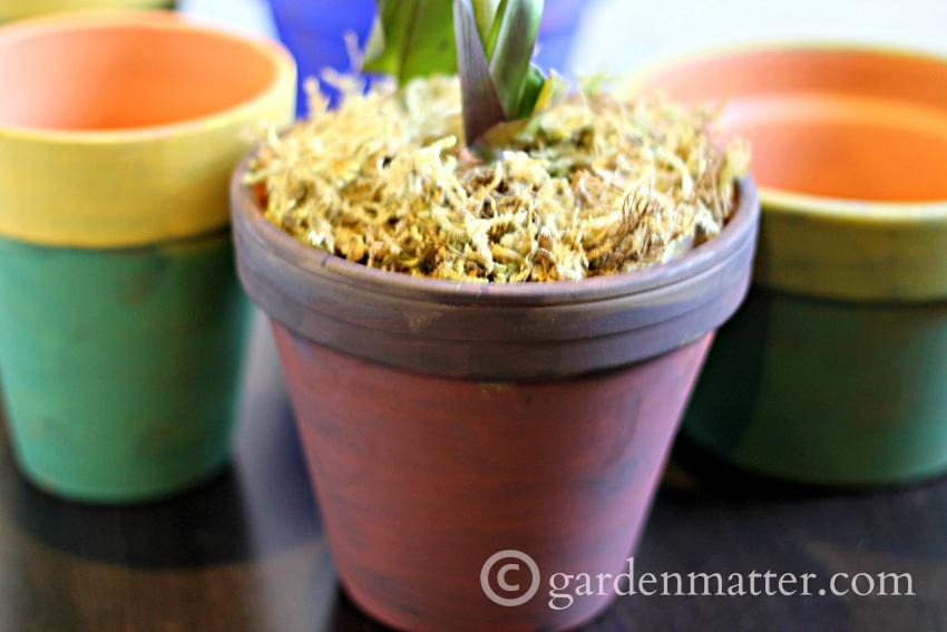 Pigment Pots with Orchid ~ gardenmatter.com