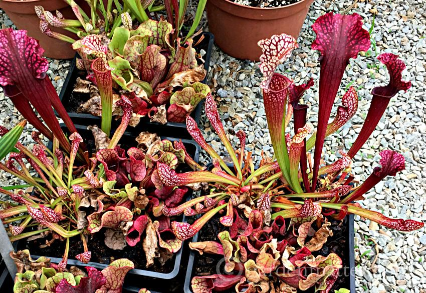 A few tips on how to choose the best plants and a trip to a unique and beautiful nursery.