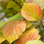 Plants with Fall Color You'll Want to Have in Your Garden