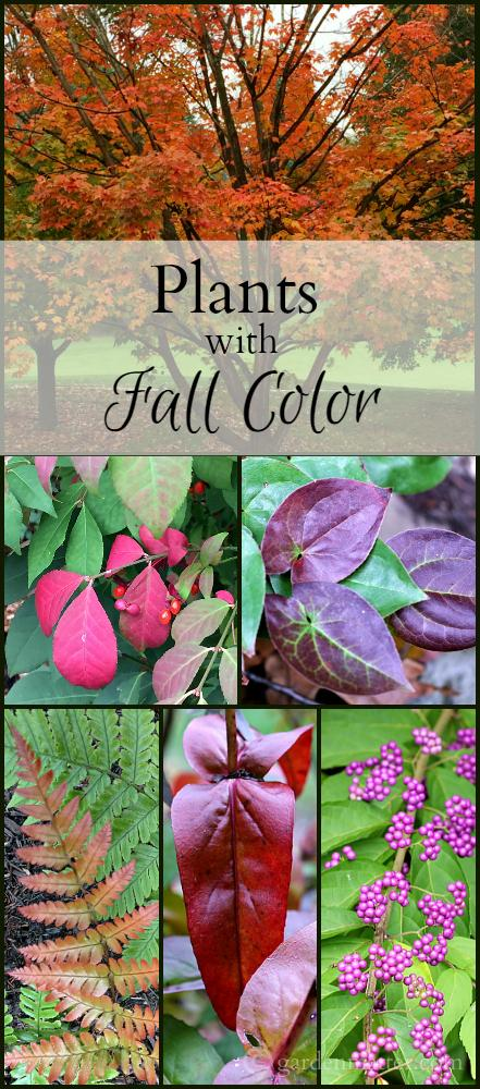Plants with fall color collage