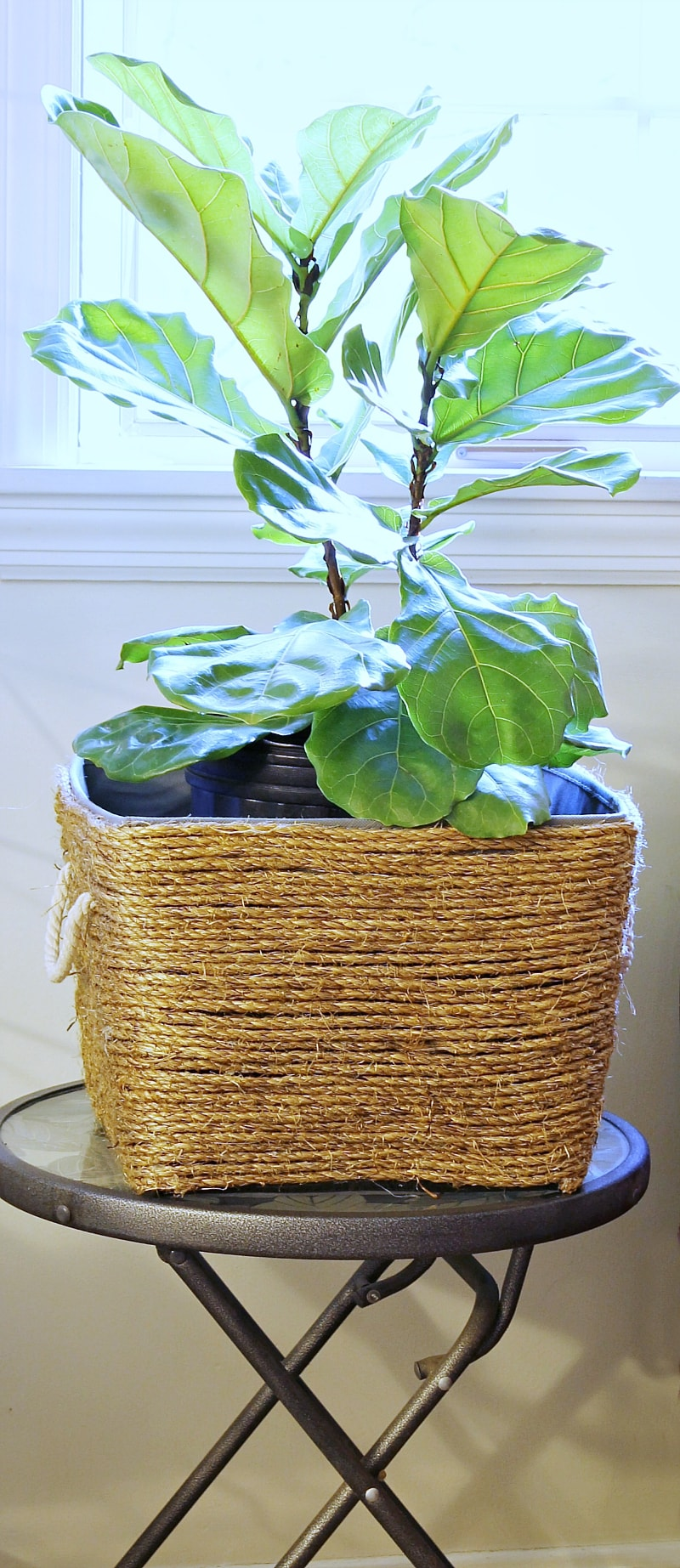 DIY rope basket planter with a fiddle leaf fig tree.