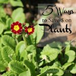 Learn 5 easy ways to save money when money plants for your garden.