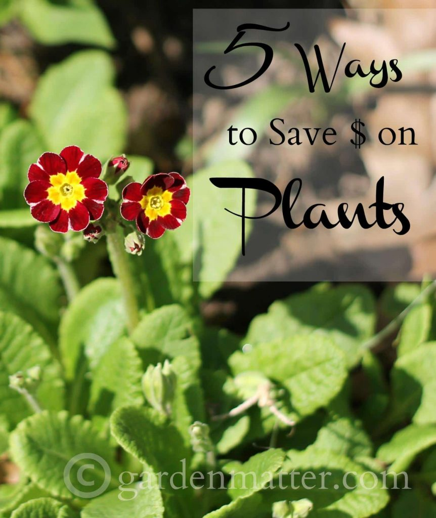 Learn 5 easy money saving tips when attempting to get more plants for your garden.