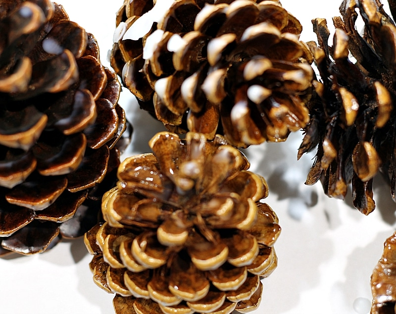 Pine cones with scented wax