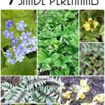 7 Shade Perennials~gardenmatter.com