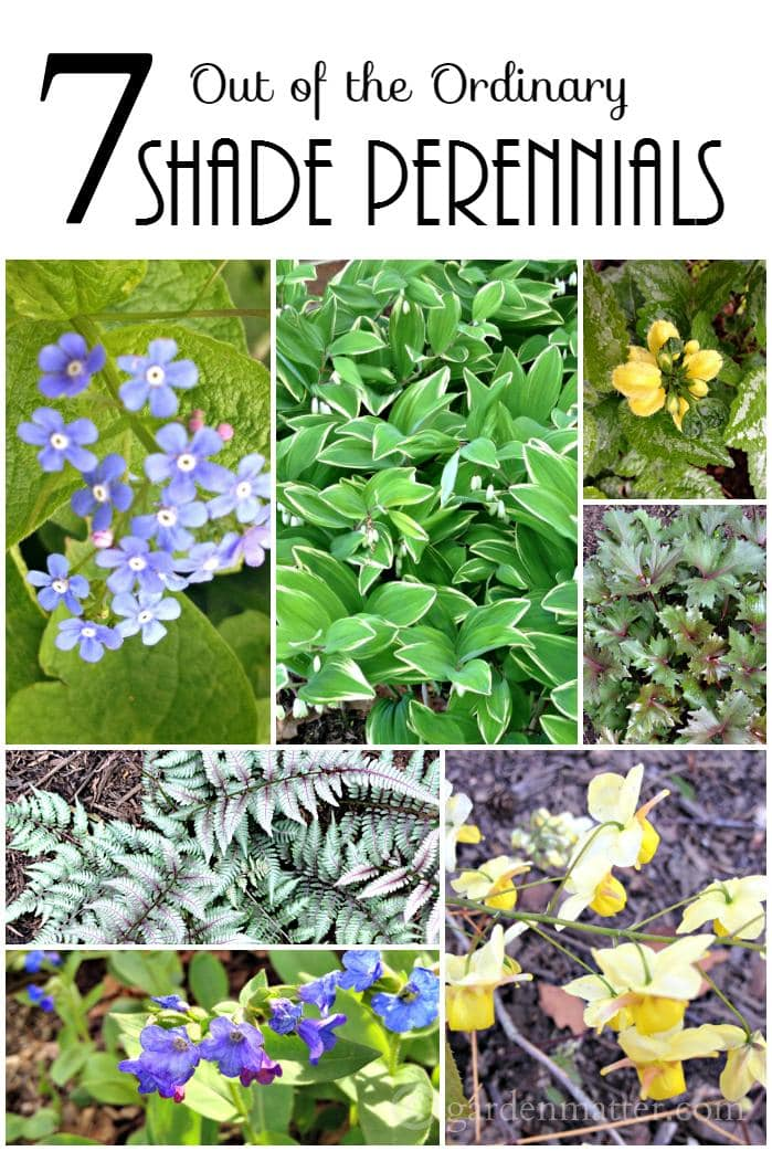 Learn about 7 easy to grow shade perennials, a little out of the norm that you will definitely want to add to this years wish list for the garden.