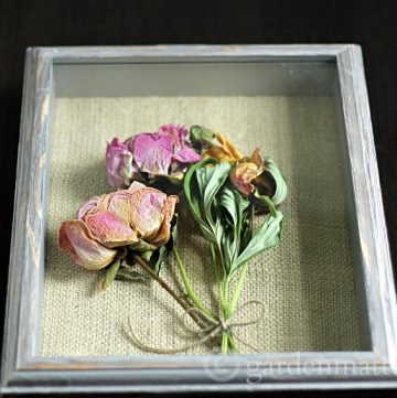 This fun and simple craft can be easily made with any dried flower. Here we created one with shadow box peonies and a burlap backing.