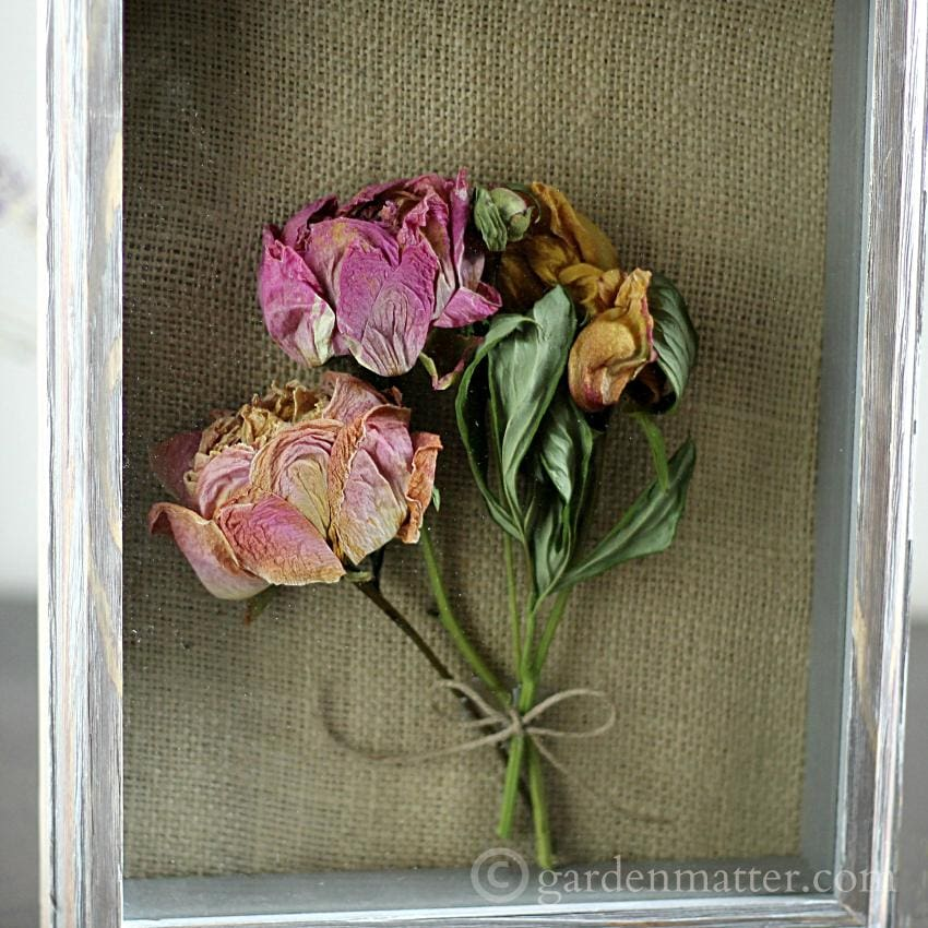 This fun and simple craft can be easily made with any dried flower. Here we & Shadow Box Peonies | Hearth u0026 Vine Aboutintivar.Com
