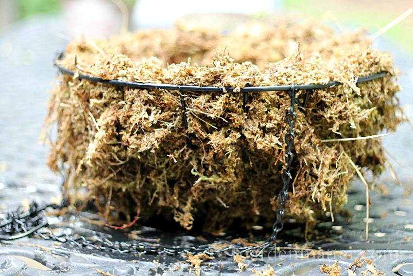 Sphagnum lining the basket ~ Rustic Sphagnum moss planter