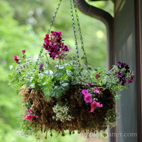 Colorful hanging plant basket ~ Rustic Sphagnum moss planter ~ gardenmatter.com