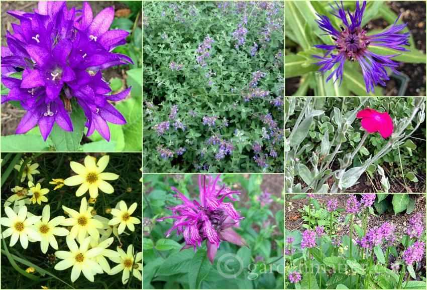 7 Easy Sun Loving Perennials Worth Planting