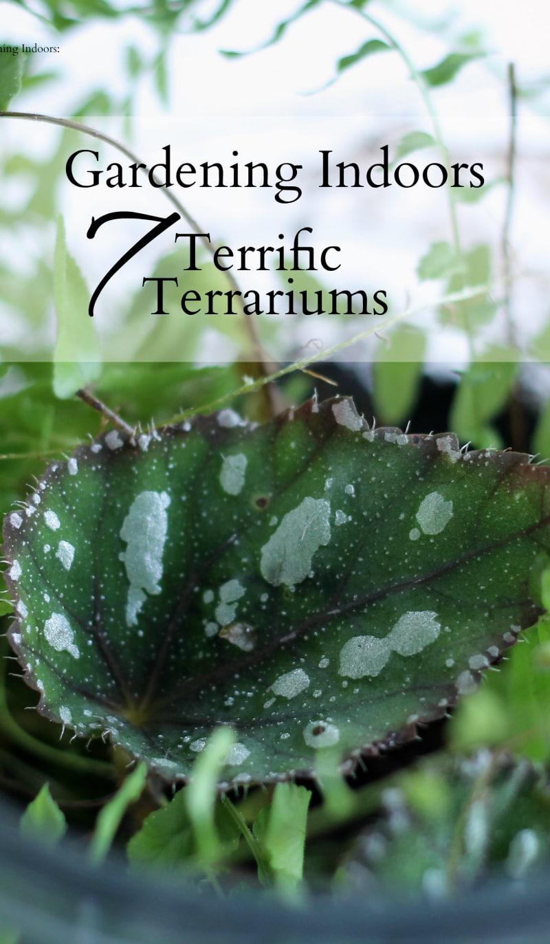 Seven different tutorials on how to make a terrarium for indoor gardening.