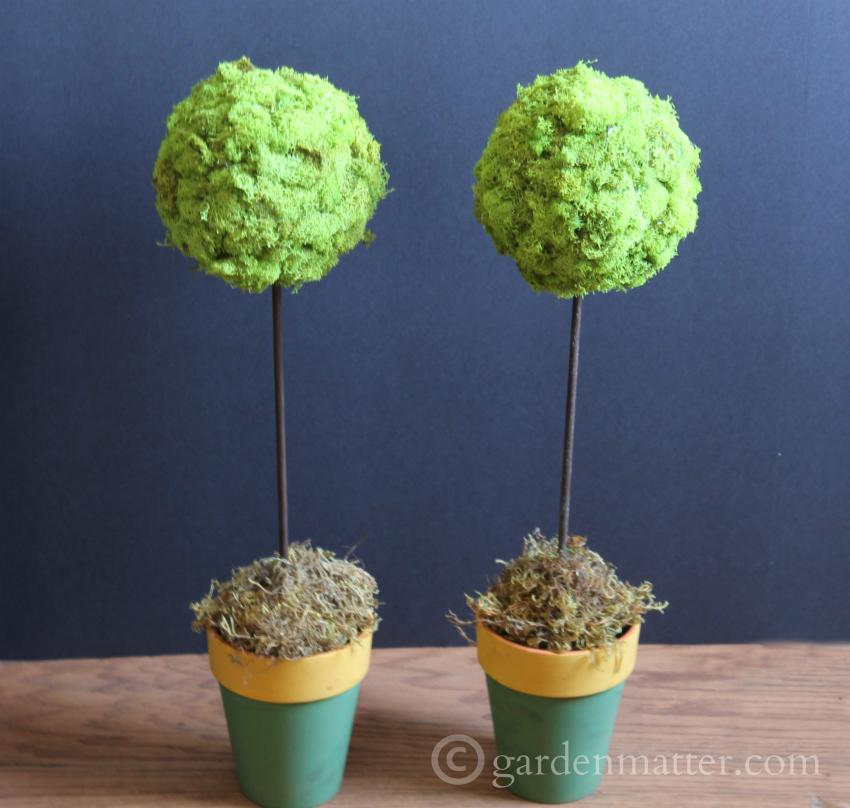 Two Spring Topiaries