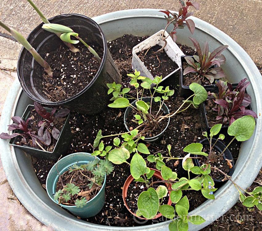 divide and share ~ 5 money saving tips ~ gardenmatter.com