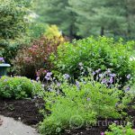 View from front porch ~ gardenmatter.com