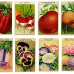 Creative Fun with Vintage Seed Packet Prints