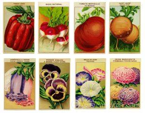 Vintage Seed Gift Tags `