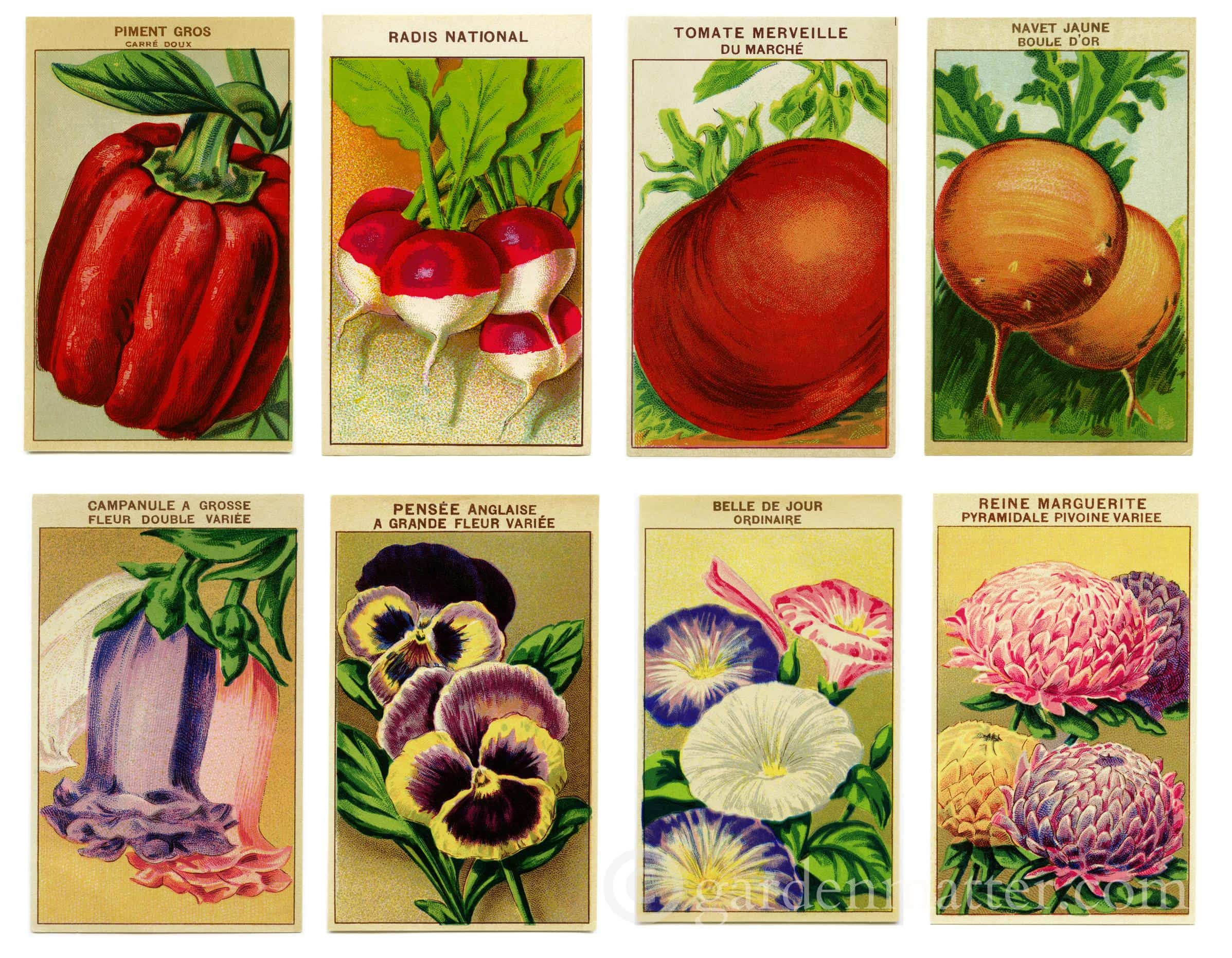 image about Printable Seed Packets referred to as Traditional Seed Packet Prints and Strategies in direction of Craft with Them