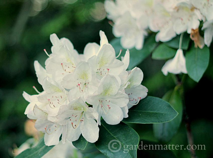 5 Reasons to Consider White in the Garden