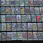 Learn about wildflower cigarette collectible cards with beautiful prints in 50 different varieties.