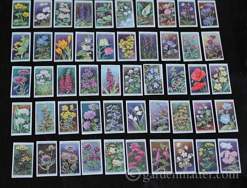 Garden Collectibles: Wildflower Cigarette Cards