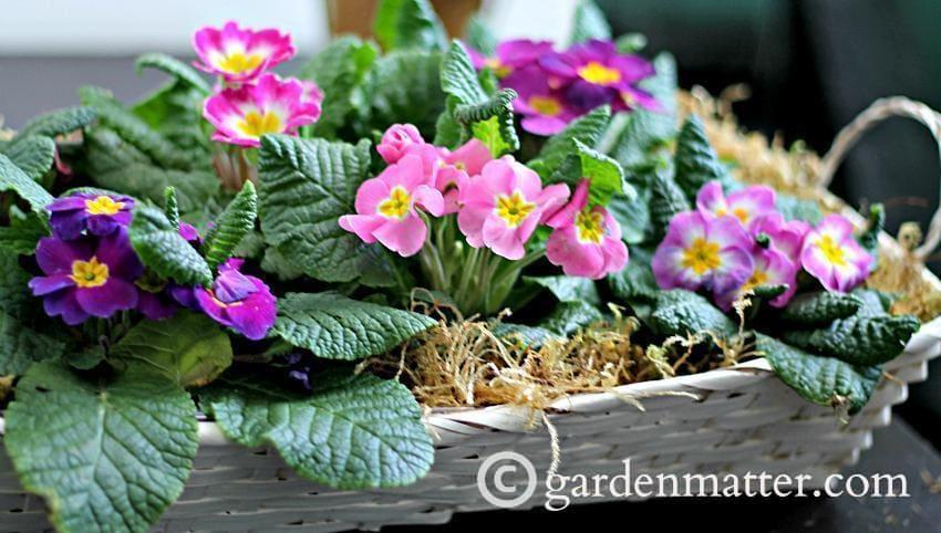 Easy Spring Dish Garden