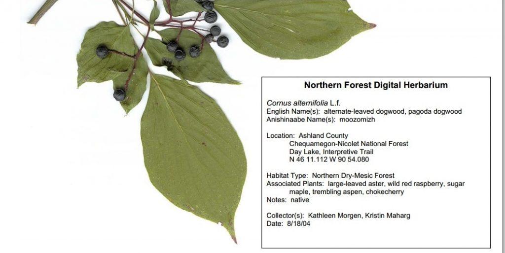 NorthernForestDigitalHerbarium