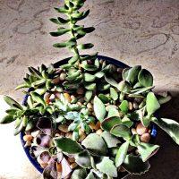 succulent dish garden ~gardenmatter.com