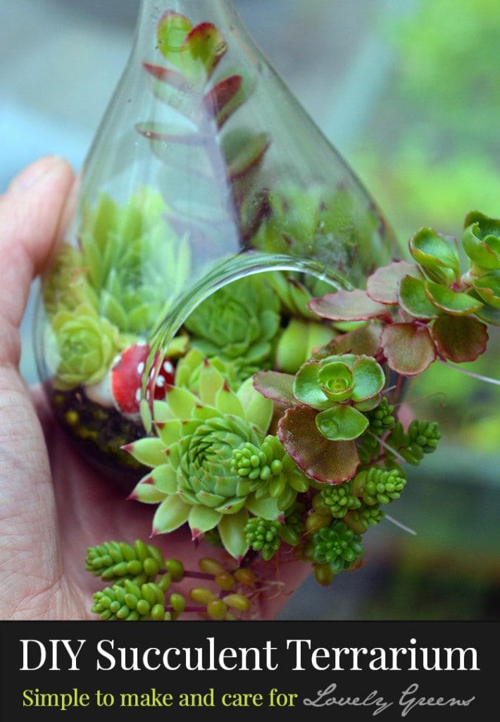 succulent-terrariium-lovely-greens