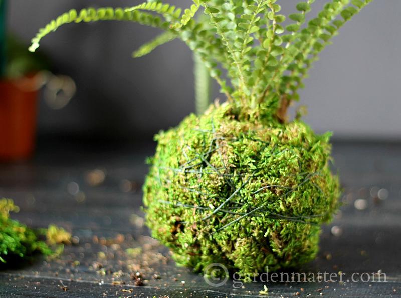 waxed twine - kokedama string garden - gardenmatter.com